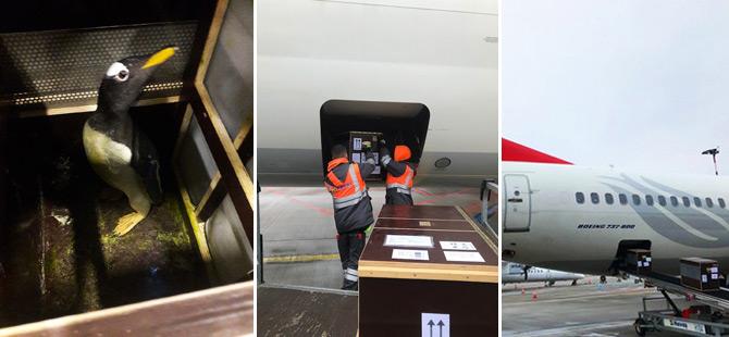 Turkish Cargo, Yavru Aslanları ve Penguenleri Yeni Yuvalarına Taşıdı