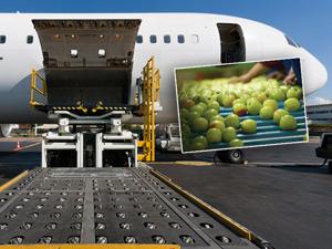 Bozulabilir Ürünler Artık Hava Kargo ile Sertifikalı Taşınacak