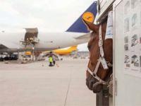 Lufthansa Entegre Ulaşıma Odaklandı