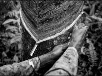 Pirelli'den Doğal Kauçuk Hikayesi: Tayland'dan Endonezya'ya Uzanan Görsel Bir Yolculuk